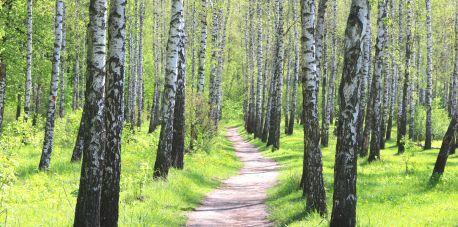 """""""Wielki Test o Lesie"""" – rozgrzewka 3"""