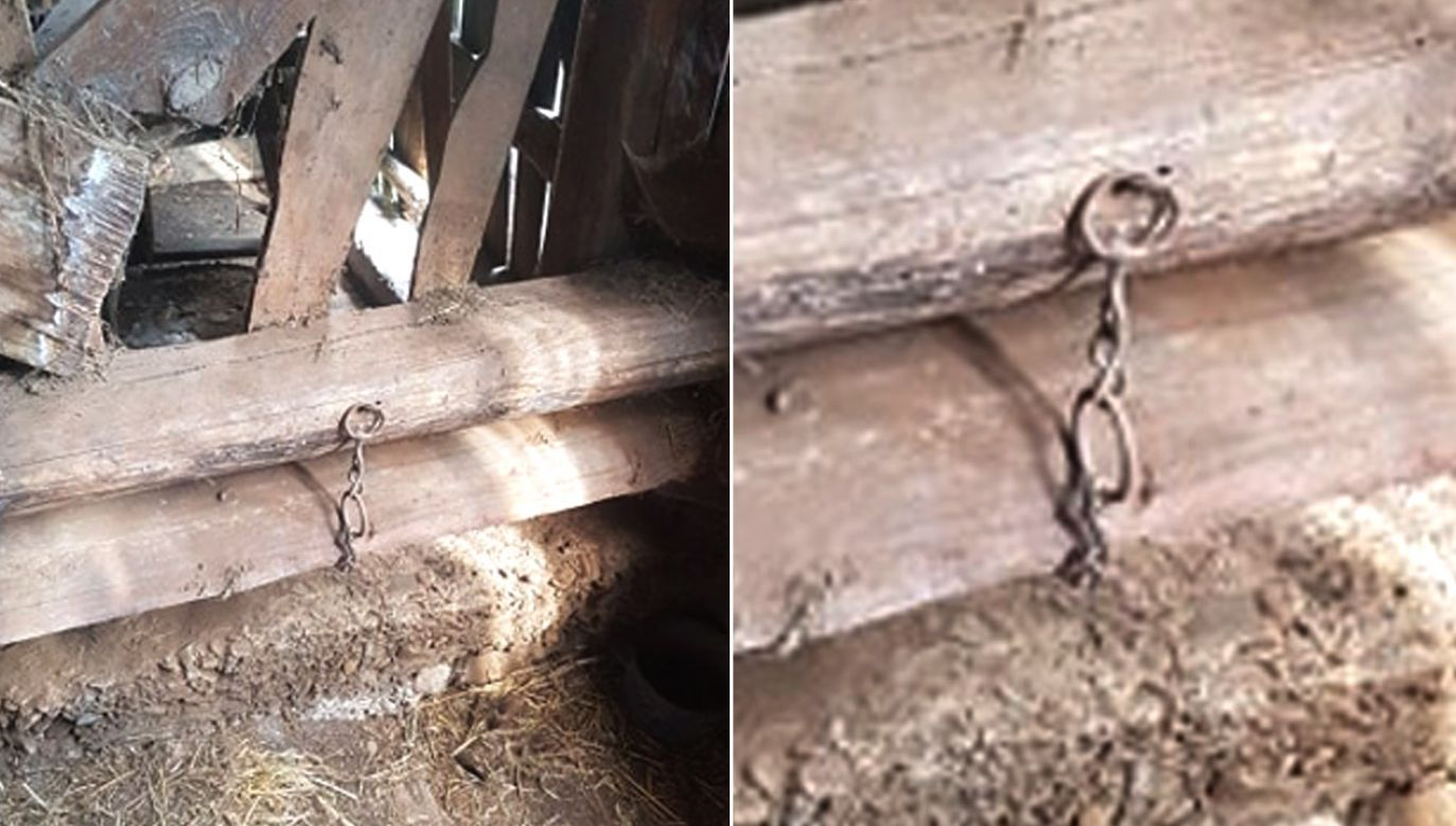 Zwierzę było gnębione od wielu miesięcy (fot. OTOZ Animals Inspektorat Jasło)