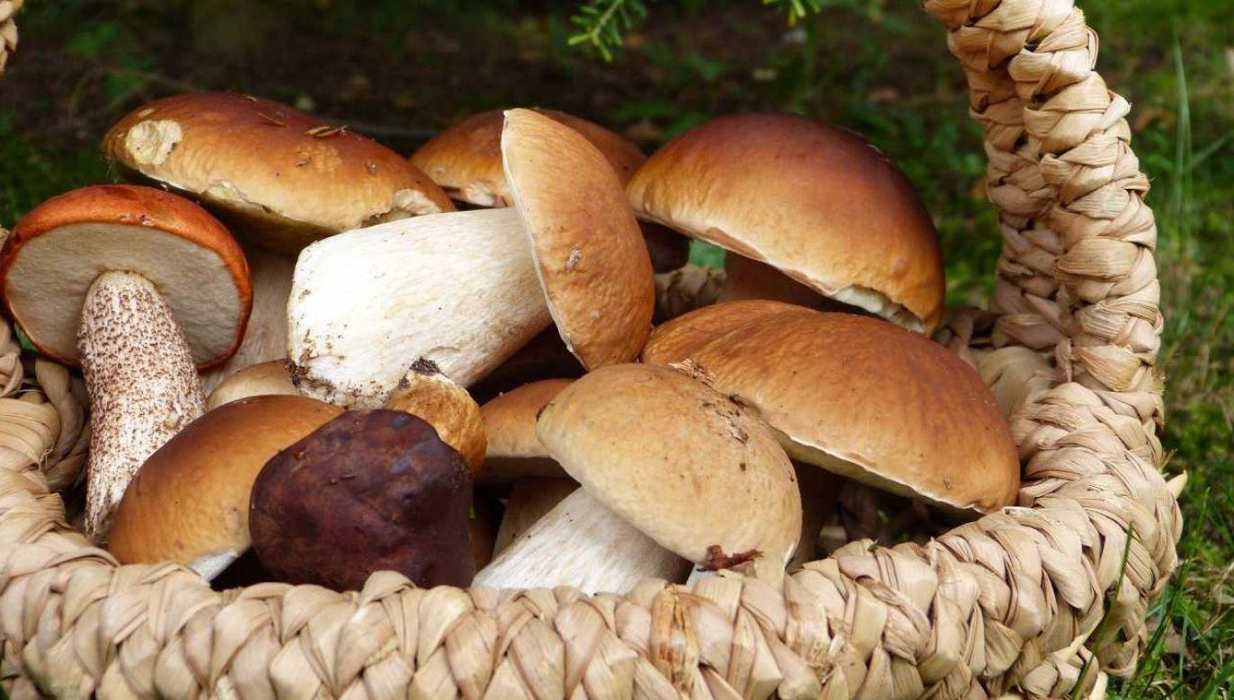 100 kilogramów borowików i innych grzybów odebrali grzybiarzom funkcjonariusze Straży Leśnej  (fot. Pixabay/silviarita)