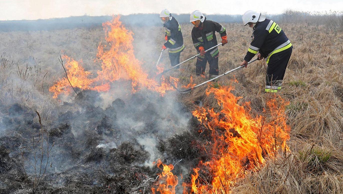 Policja wciąż szuka sprawcy bądź sprawców tego podpalenia (fot. PAP/Artur Reszko)