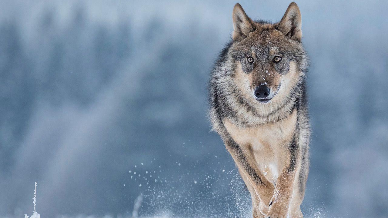 Leśnicy uspokajają (fot. Shutterstock/Vlada Cech)