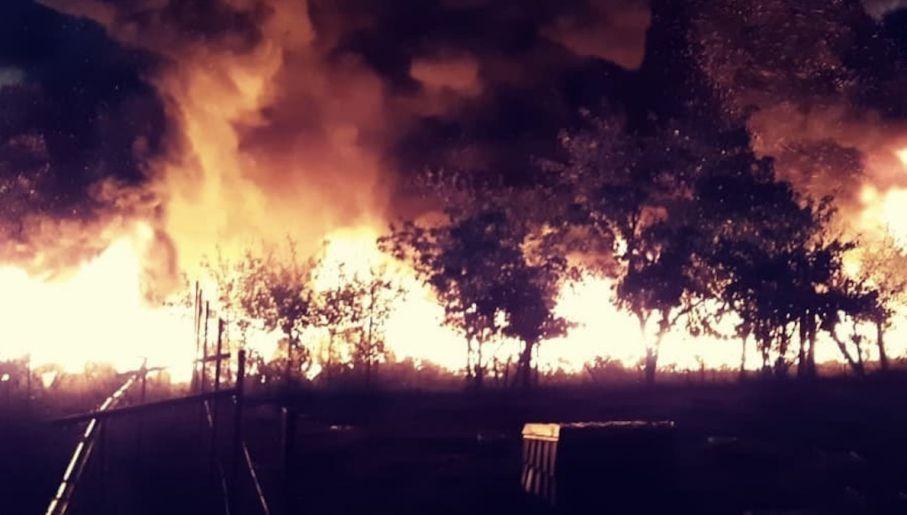 Priorytetem dla strażaków była obrona przed ogniem trzech pobliskich domów (fot. KM PSP Gorzów Wlkp)