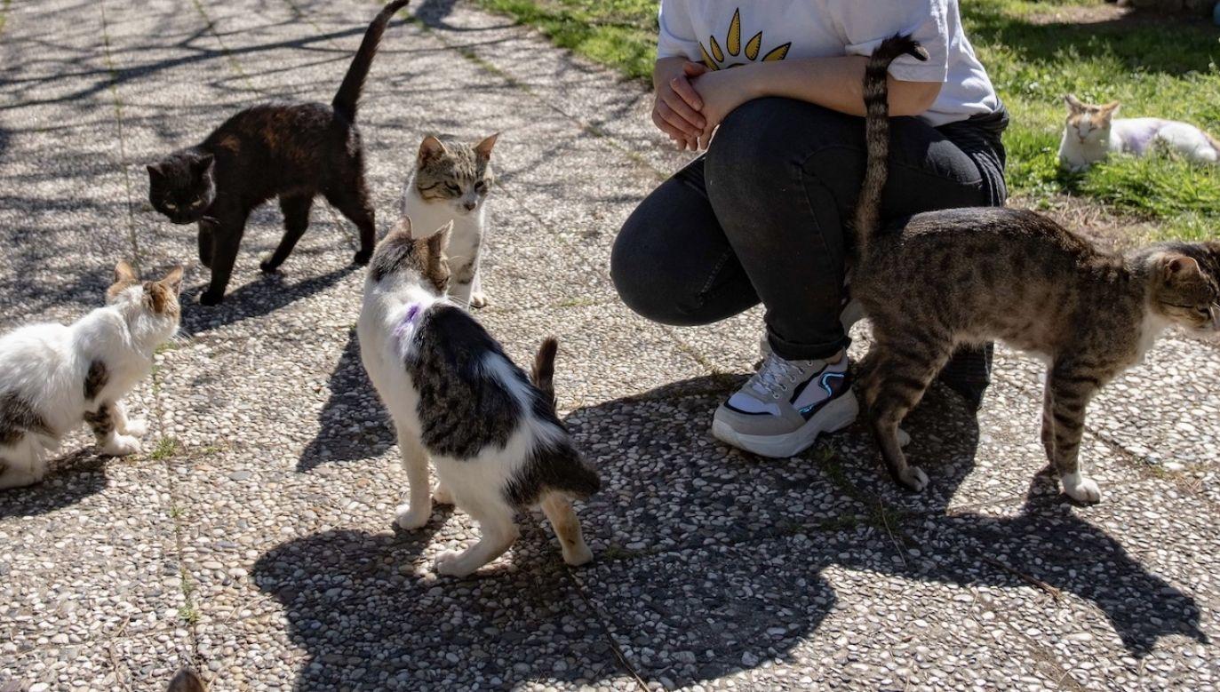 Za drobną opłatą obejrzeć będzie można ponad 1300 filmów z kotami w roli głównej (fot. arch.PAP/Photoshot)