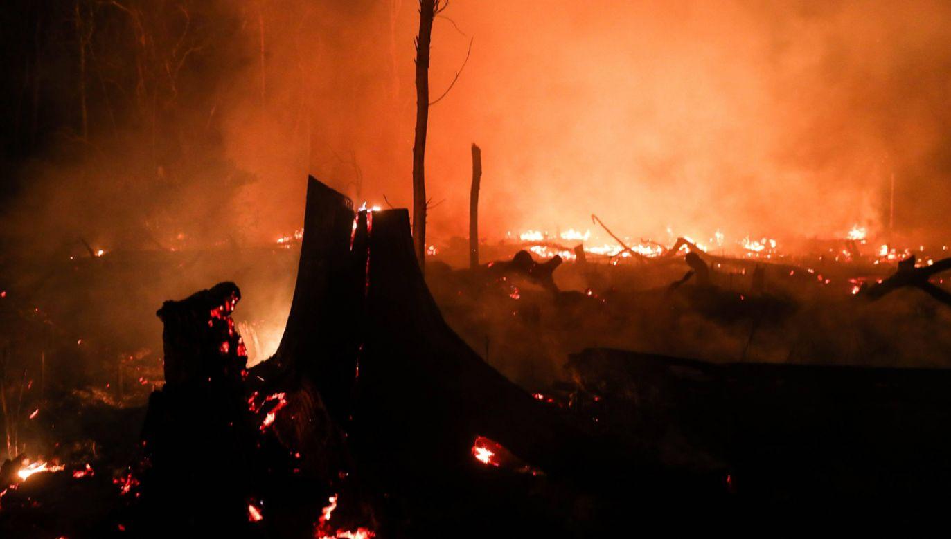 Większość pożarów w Brazylii rozniecana jest celowo (fot. PAP/EFE/Fernando Bizerra Jr)