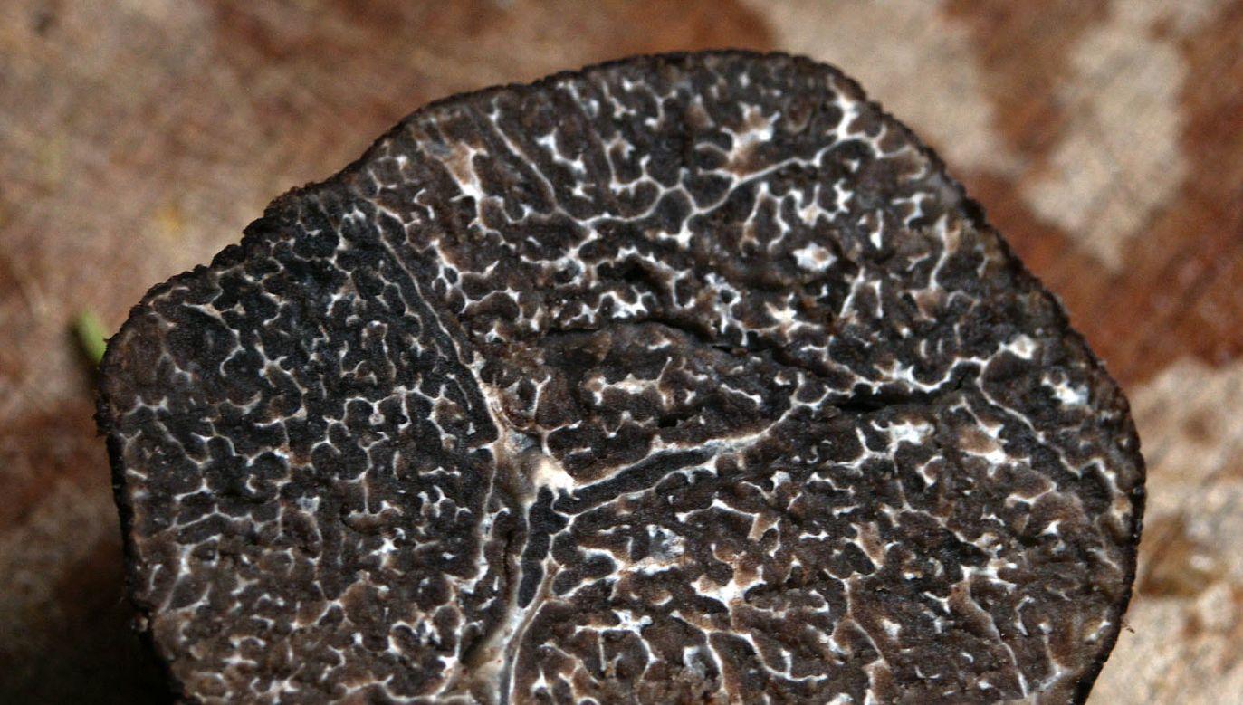 Restauratorzy rozdali trufle warte 5 tys. euro (fot. Wikimedia Commons/moi-même)
