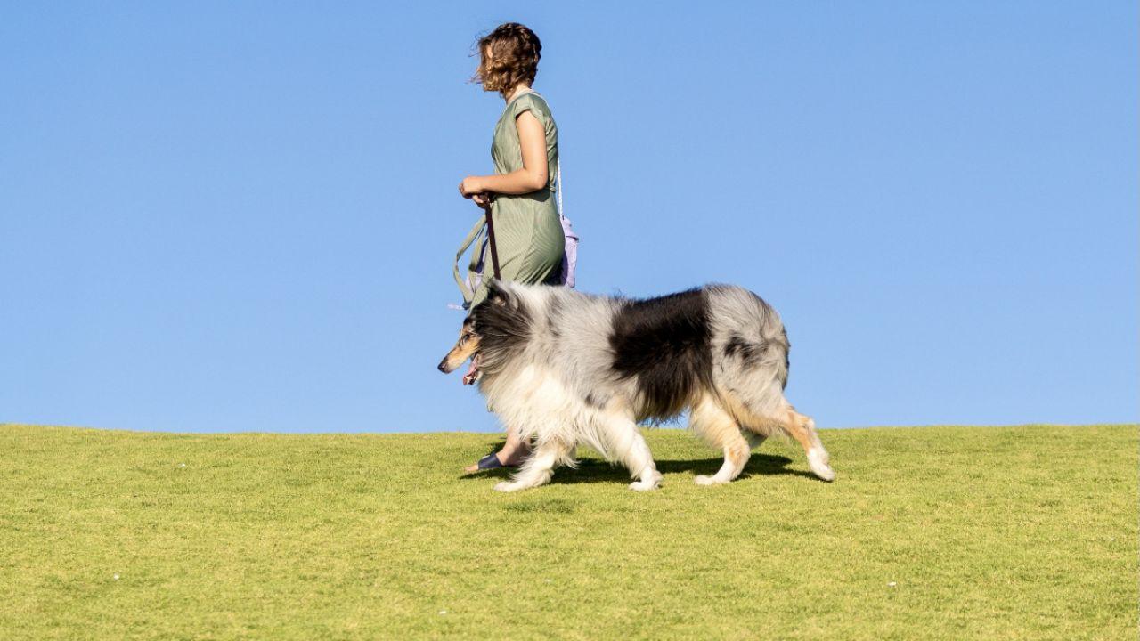 Psy wykrywają nawet pacjentów bezobjawowych (fot. PAP/EPA/RICHARD WAINWRIGHT)