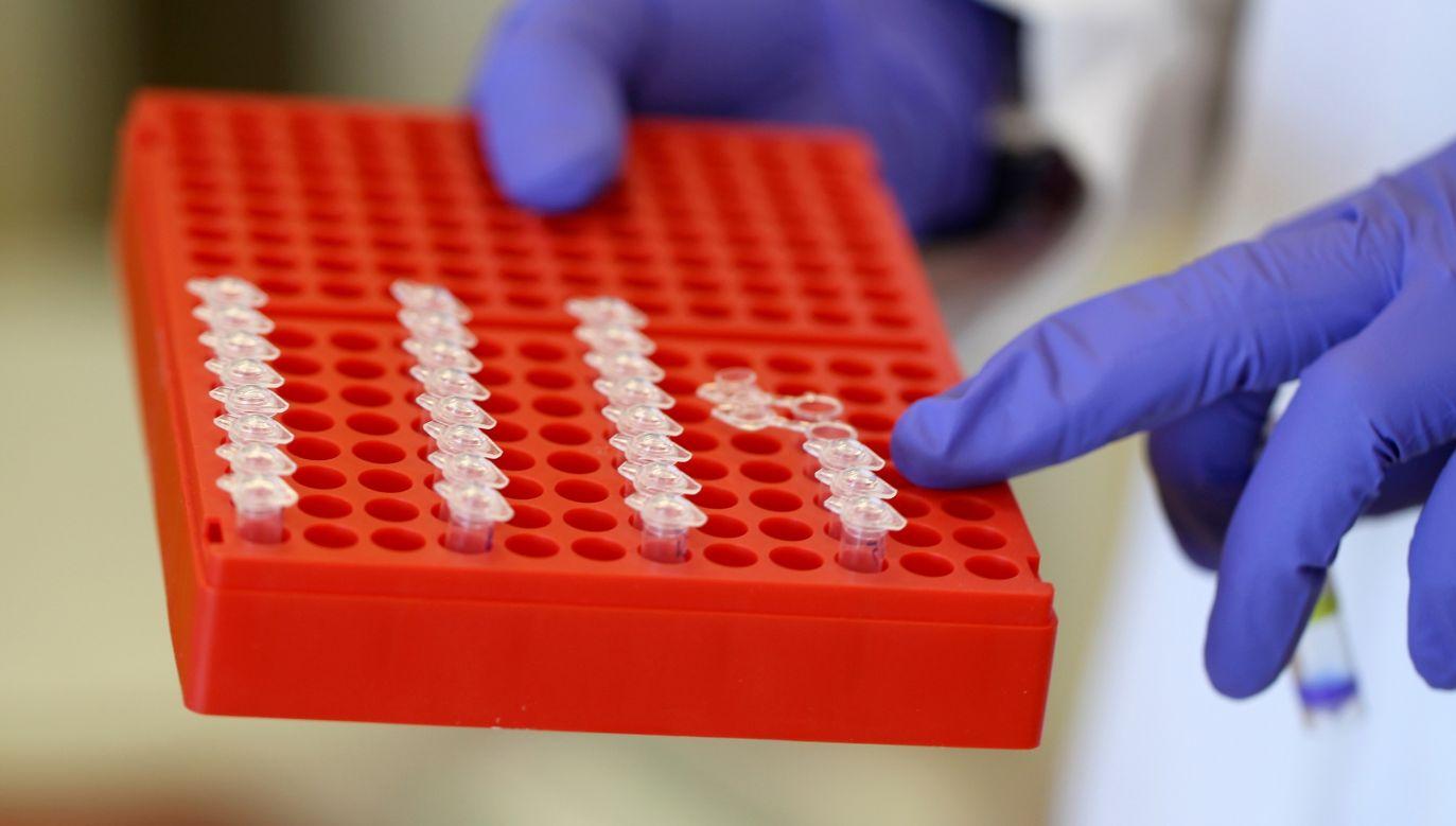 Probówki z materiałem używanym do PCR (reakcji łańcuchowej polimerazy, czyli metody powielania łańcuchów DNA) w Novofagu w Bostonie. To start-up zajmujący się inżynierią wirusów zwanych fagami, których zadaniem jest poszukiwanie i niszczenie bakterii. Fot. Jonathan Wiggs / The Boston Globe via Getty Images
