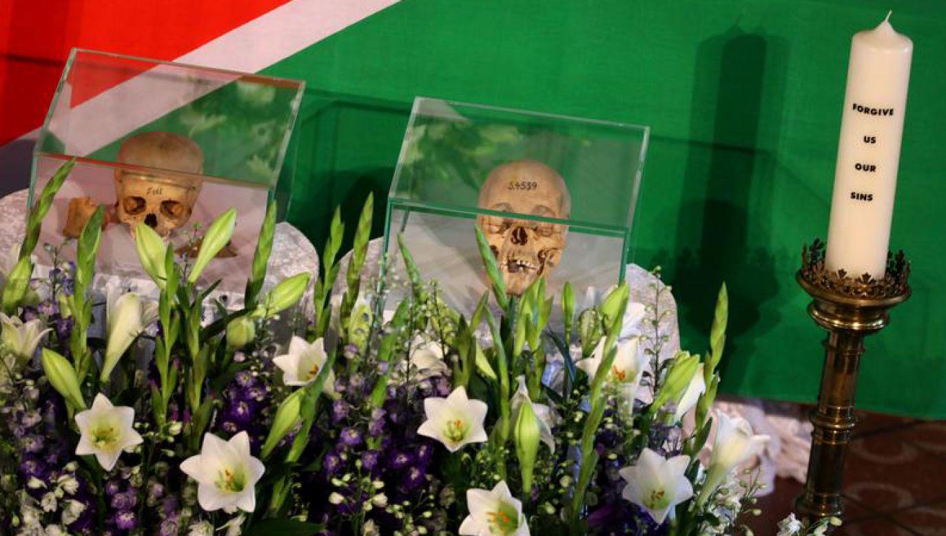 Ludzkie czaszki z czasów kolonialnych wystawione na ceremonii w Berlinie, 20 sierpnia 2018 r. (fot.  REUTERS/Christian Mang)