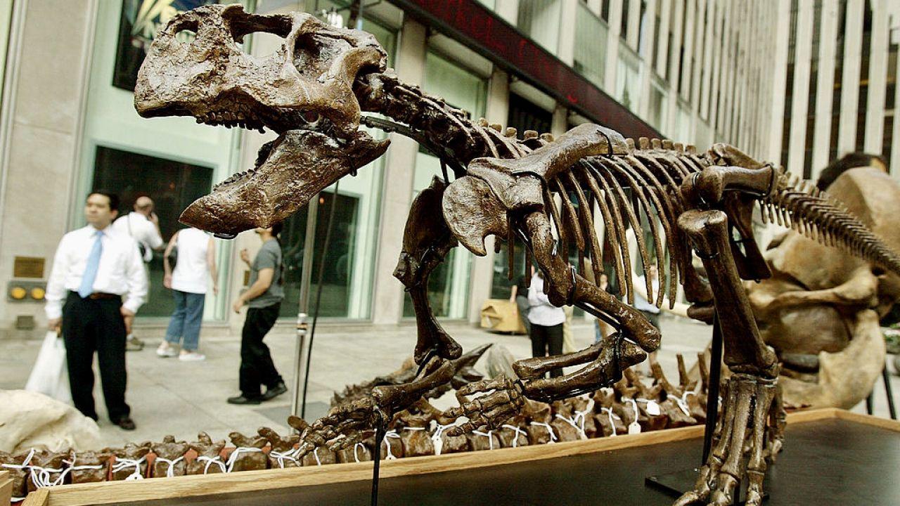 Wymieranie dinozaurów 66 mln lat temu powszechnie uznawane jest za początek ery ssaków (fot. Mario Tama/Getty Images)
