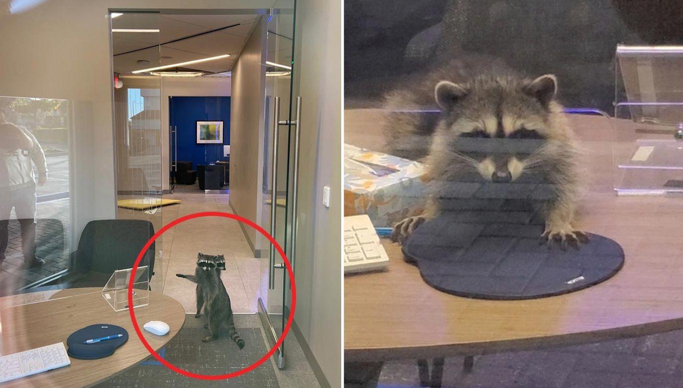 Zwierzęta   przewróciły komputer i poczęstowały się puszką migdałowych ciastek (fot. PHS/SPCA)