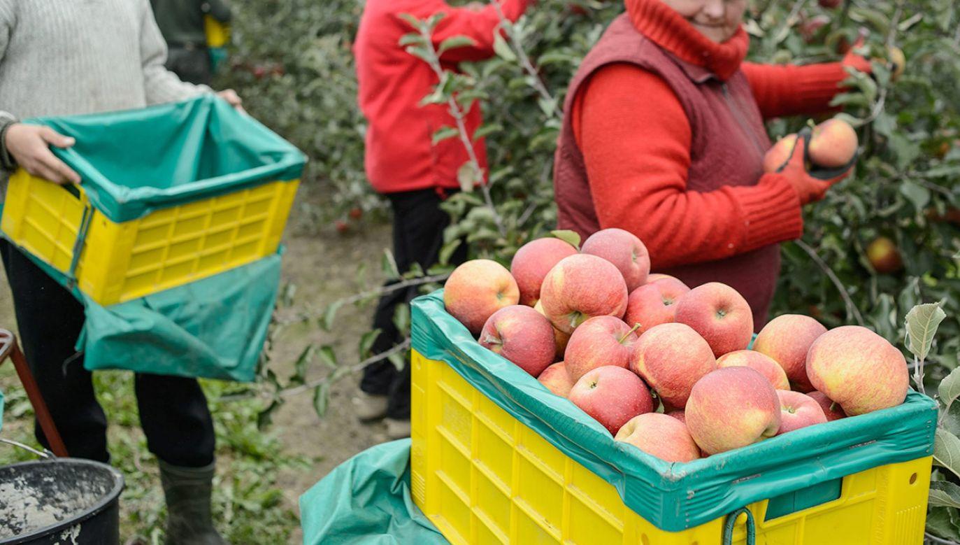 Szef resortu rolnictwa o obawach dotyczacych umowy z Mercosur (fot. arch.PAP/Wojciech Pacewicz)
