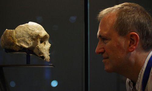 Chris Stringer, pracownik naukowy Muzeum Historii Naturalnej w Londynie, twarzą w twarz z neandertalską czaszką, listopad 2012. Fot. Gareth Fuller / PA Images via Getty Images