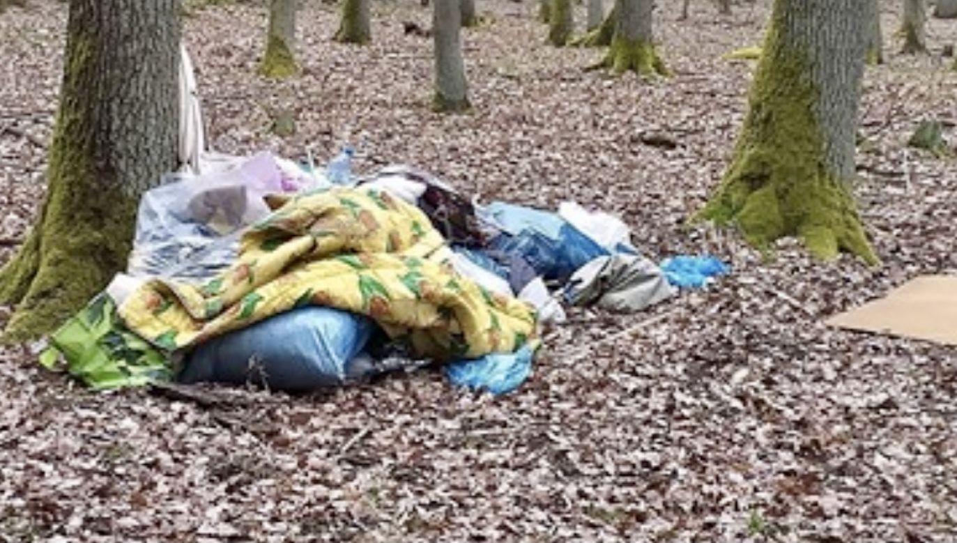 Fotografie zostały przekazane dyrekcji parku (fot. FB/Wolontariat WPN)