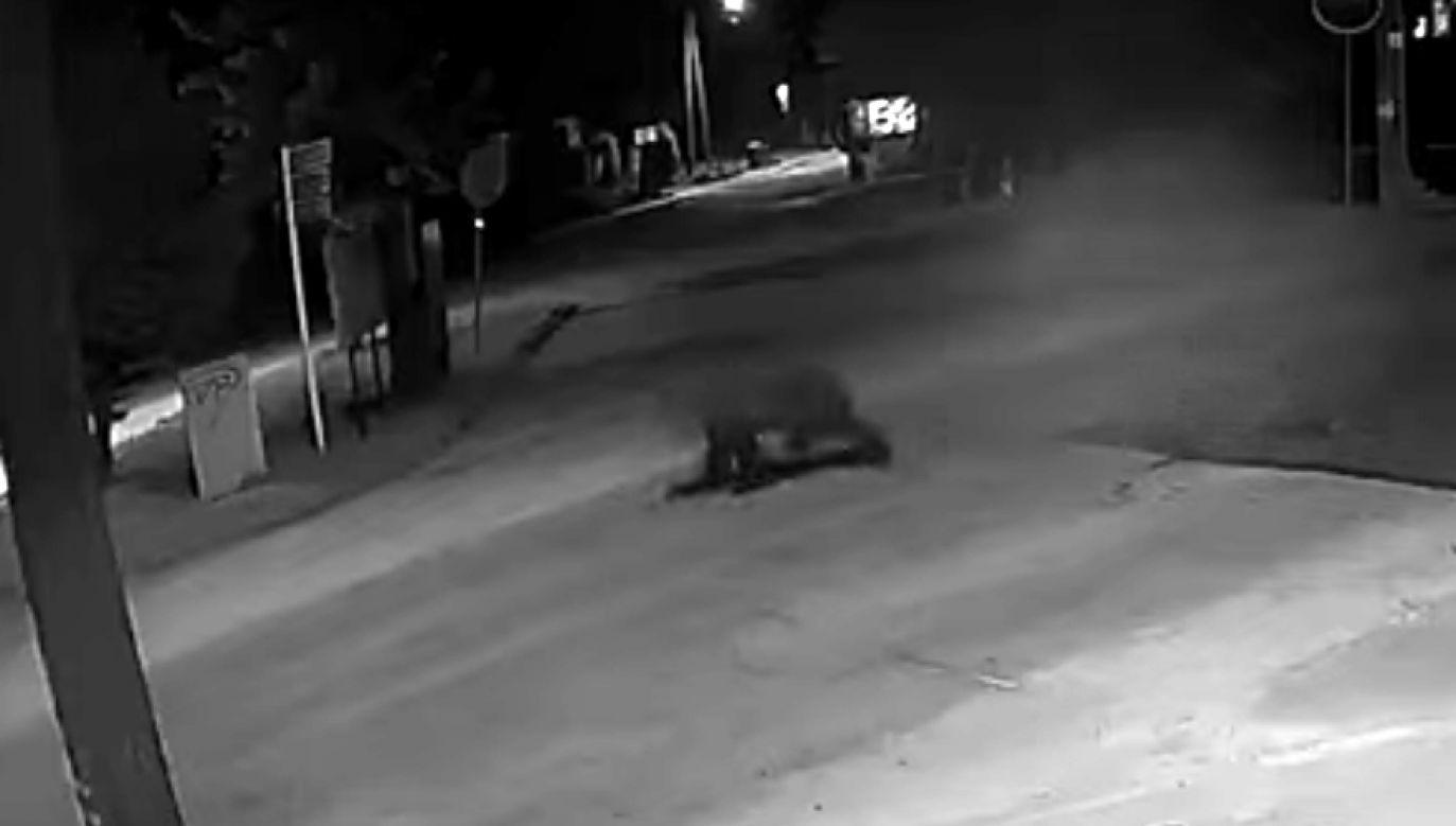 Niedźwiedź został nagrany przez sklepowe kamery (fot. YouTube/Tygodnik Podhalański)