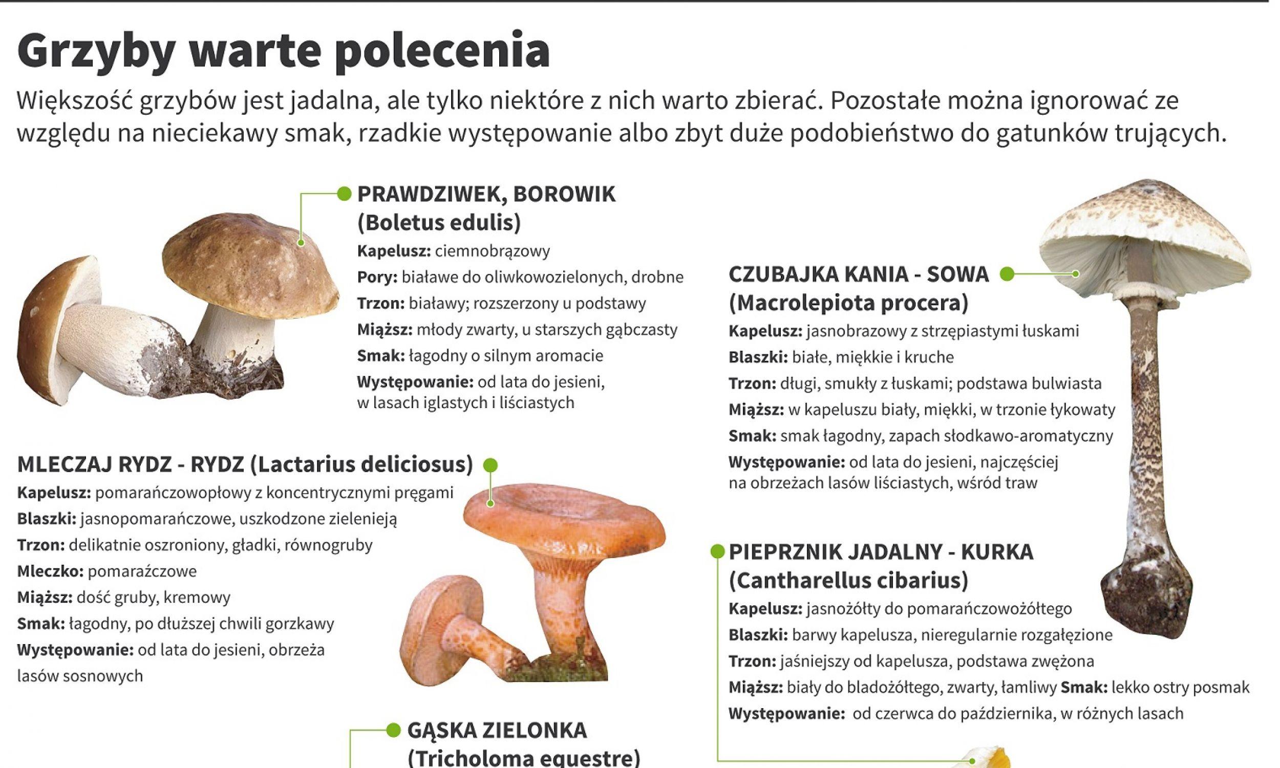 Grafika: PAP, Maciej Zieliński