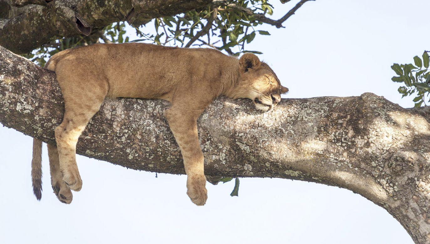 Różne gatunki mają swoje odrębne strategie dotyczące snu (fot. Shutterstock/GTS Productions)