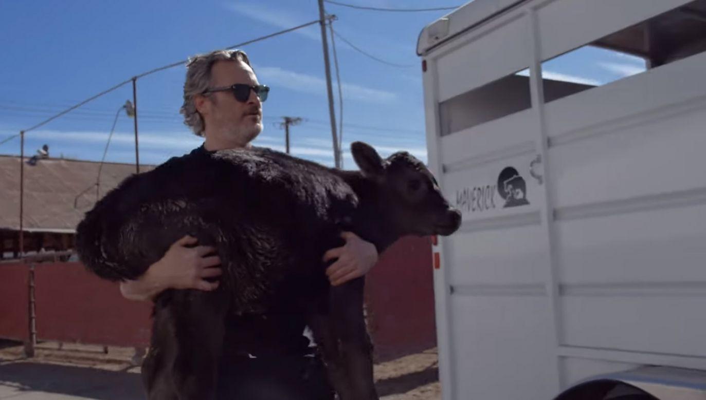 Krowa i cielę trafiły do ośrodka dla zwierząt (fot.  YouTube/farmsanctuary)